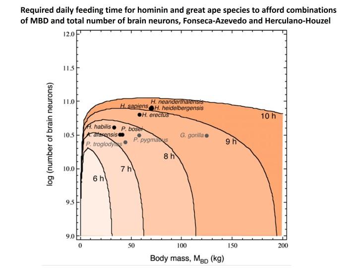Feeding hominins