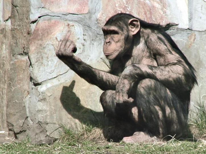 01-monkey-giving-the-finger