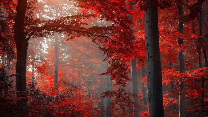 autumn-red-forest-1920x1200