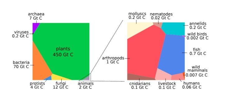 Graphical representation of the global biomass distribution by taxa.