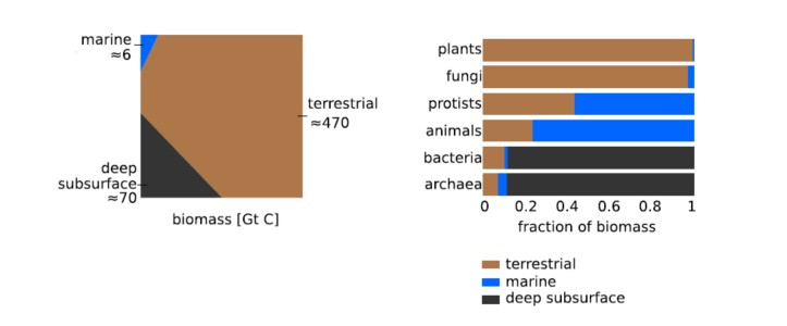 Biomass distributions across different environments. (Fig 2. ibid)